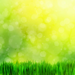 High resolution image of fresh green grass on nature blur.