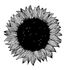 Sunflower black and white Silhouette