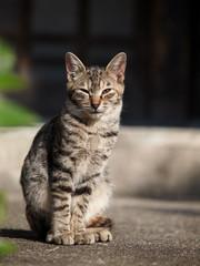 玄関先に佇む猫