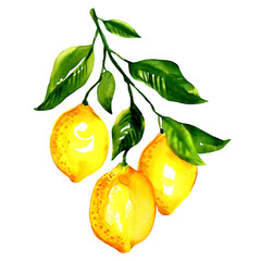 Branch of  lemons with leaves isolated