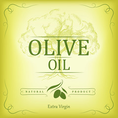 oil. Vector  olive tree branch For labels, pack.