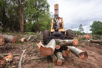 Trees Logs Machines