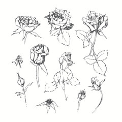 Set of monochrome roses  isolated on white background. Hand draw