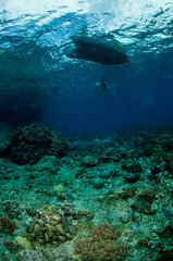 Underwater below the surface in Banda, Indonesia