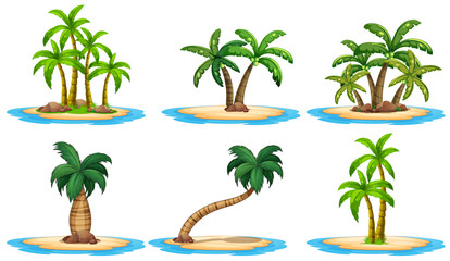 Islands and palm tree