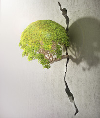 Tree breaks free. Good concept for freedom and success concept.