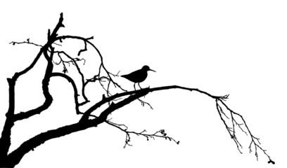 Wood sandpiper on tree silhouette