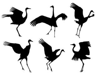 Common Crane in dance silhouettes