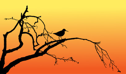 Wood sandpiper on tree silhouette