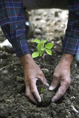 Hände pflanzen Sämling, close-up
