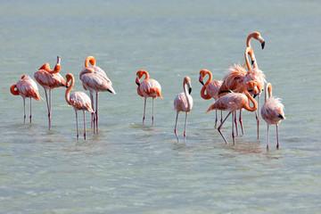 Flamingos at Jan Kok, Curacao