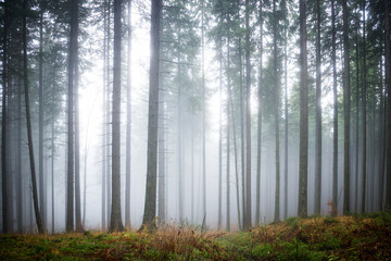 Mysterious fog in the green forest