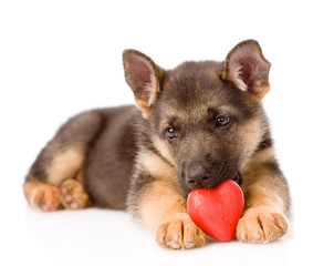 german shepherd puppy dog with a red heart. isolated on white ba