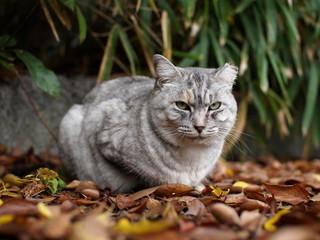 落ち葉の上の猫