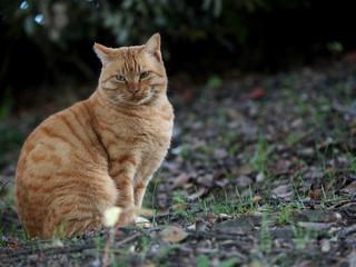 斜面に佇む猫