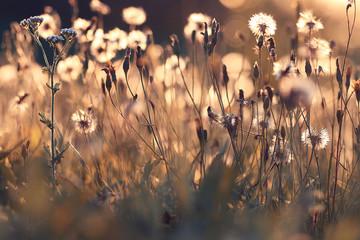 Obraz Autumn dry grass background texture - fototapety do salonu