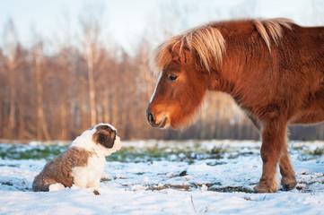 Wall Mural - Little pony and saint bernard puppy
