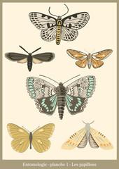 Entomologie - les papillons