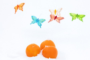 Oranges and butterflies-decorations on the snow