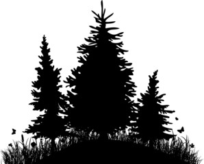 fir-trees on a hill with grass and butterflies
