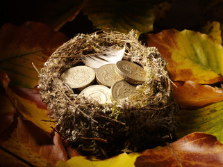 Bird's Nest filled with British pounds