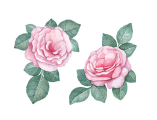 Watercolor rose illustrations