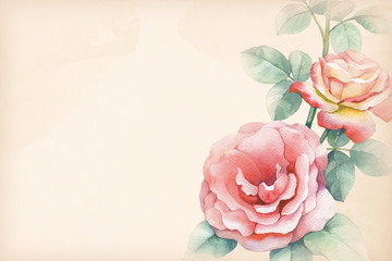 Watercolor illustration of rose flower. Perfect for greetings