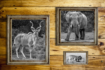 Three wooden frames with wild animals.