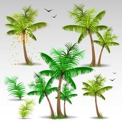 Palm trees set