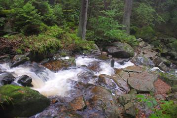Wildwasser im Harz