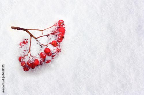 природа мороз рябина зима ветки еда ягоды  № 457100 без смс