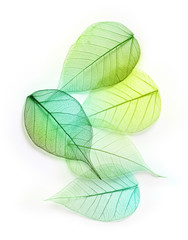 Macro green leaves