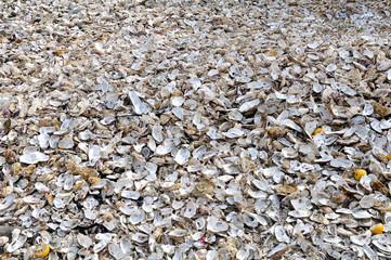 Immense tas de coquilles d'huîtres au port de Cancale