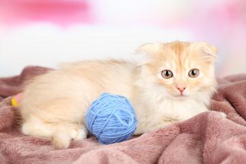 Cute little Scottish fold kitten on plaid with skein of thread