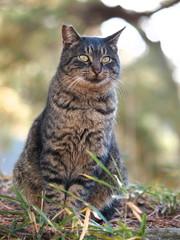 猫のポートレイト