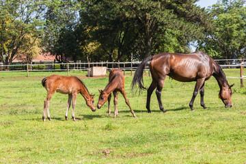 Horse Foals Colt Stud Farm