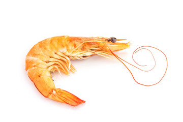 fresh shrimp isolated on a white background