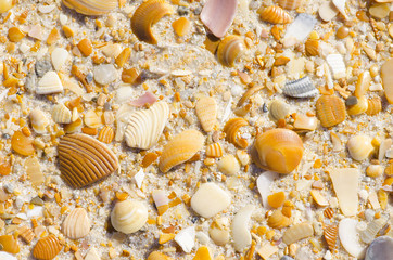 Natural sand, stones and shells beach background