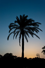 Silhouette of a palm
