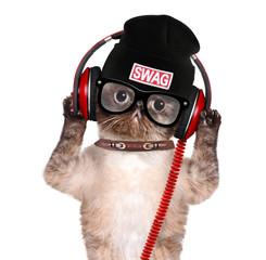 Cat headphones.