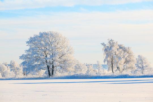 Frosty tree in snowy landscape