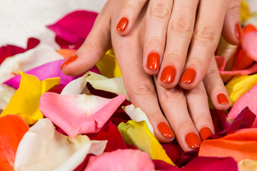 Manicure - Beautiful manicured woman's hands with red  polish