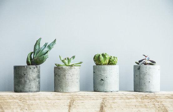 Succulents in diy concrete pot. Scandinavian room interior decor