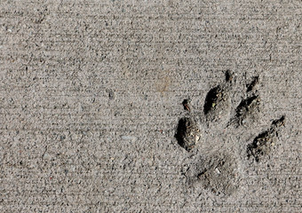 Dog Paw Print in Concrete