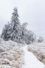 hautes fagnes in winter