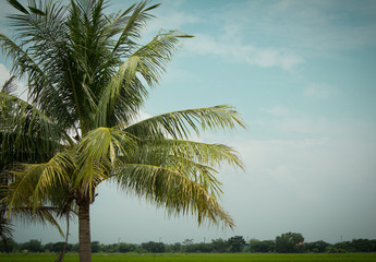 Retro palm background