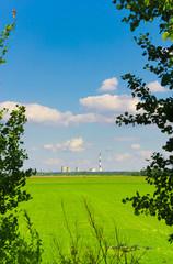 Summer Grass Landscape