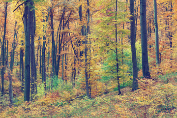 Colorful autumn trees in forest, vintage look