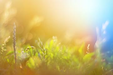 Deurstickers Landschappen Vintage photo of grass field in sunset. summer colorful backgrou