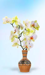 Time blooming Orchid.Japanese Spring